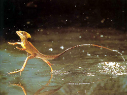 Reptile Facts - Amazing Reptile Facts